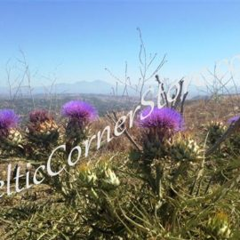 16 - Thistles of the Hills wm