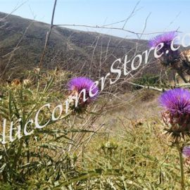 17 - Thistles in the Glen wm